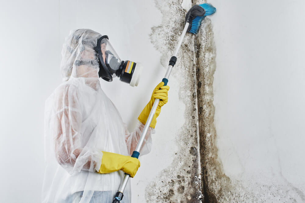 Professional home mold removal service at work
