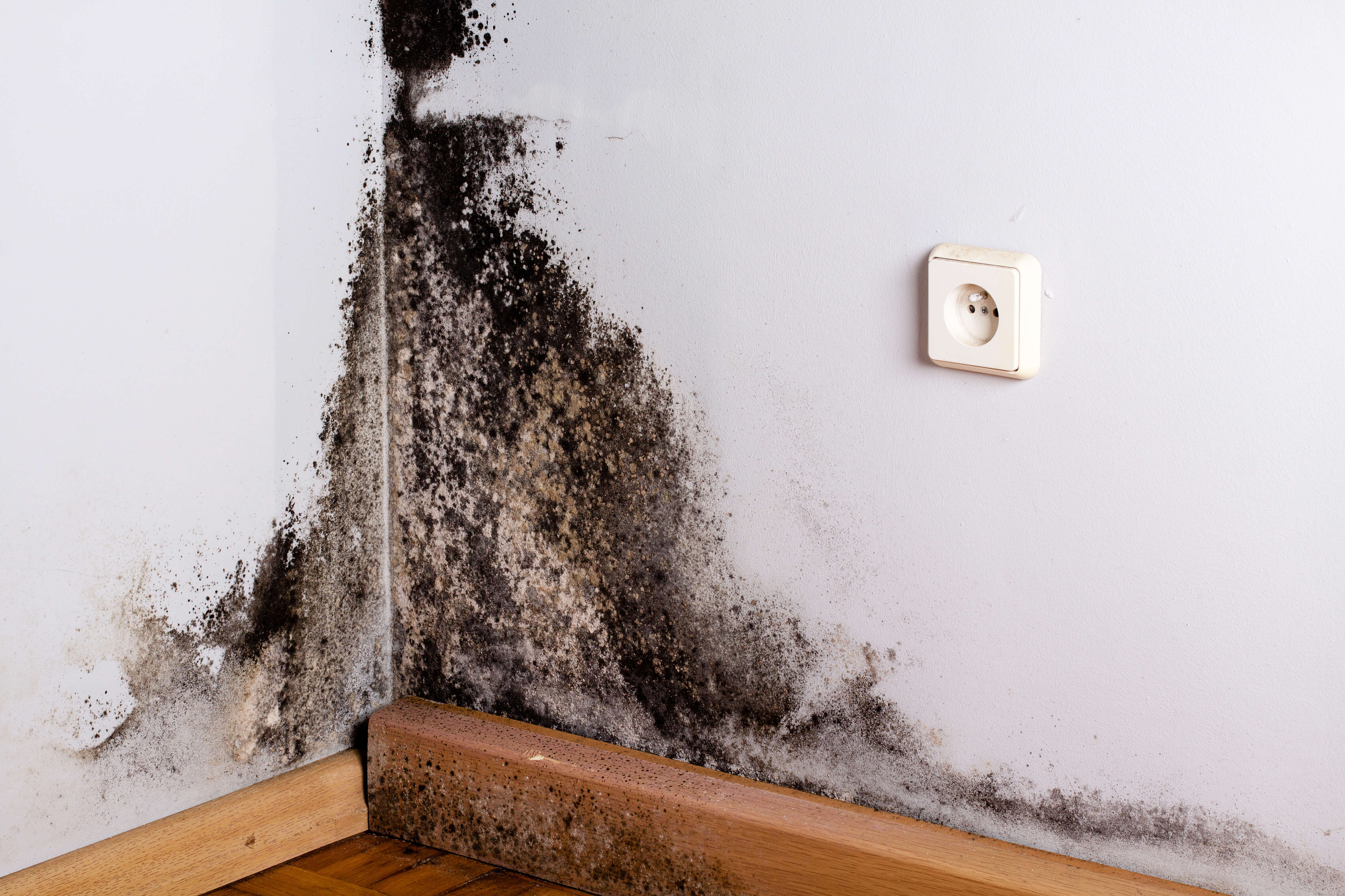 Rogers Home Improvement_Terre Haute home mold removal