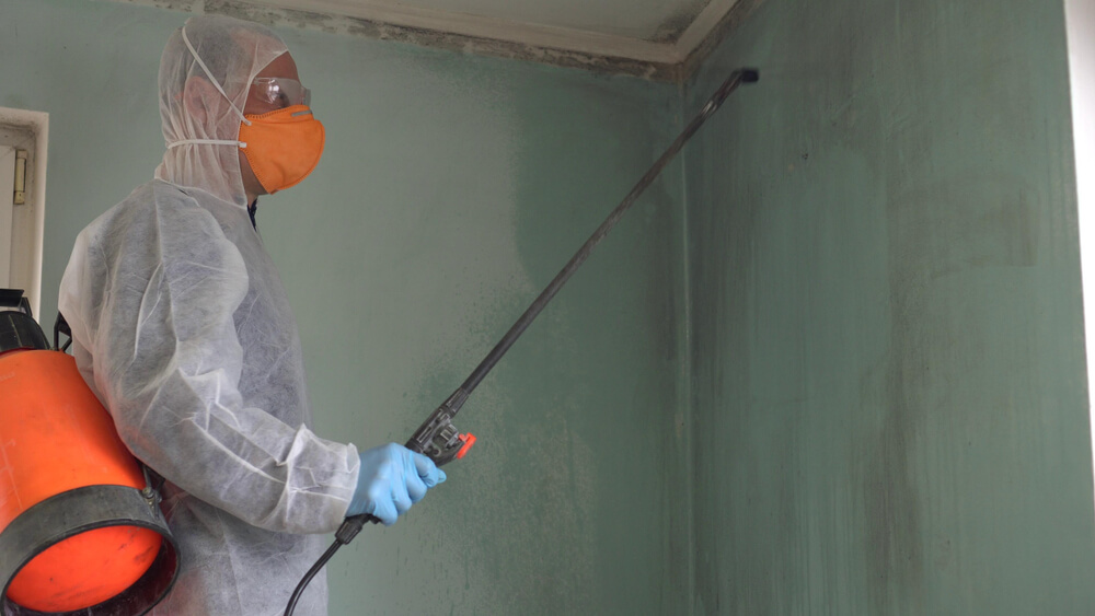 Professional conducting home mold inspection