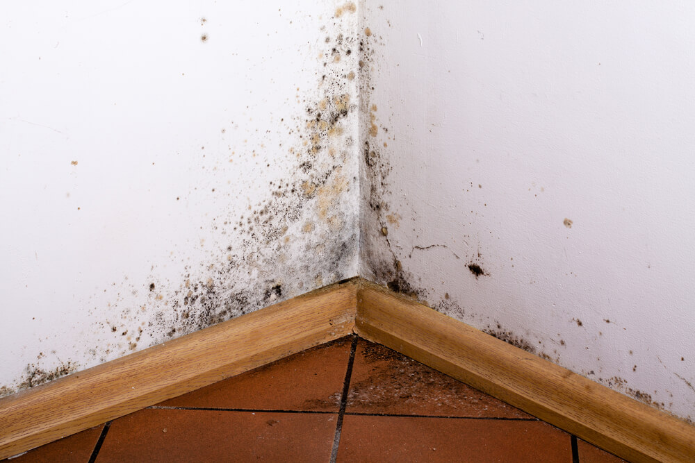 Terre Haute home mold inspection with mold on wall